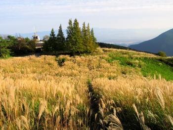 奈良県御所市の葛城山に広がる、葛城高原。 標高959メートルの山に広がるのは、ふわふわのススキです。