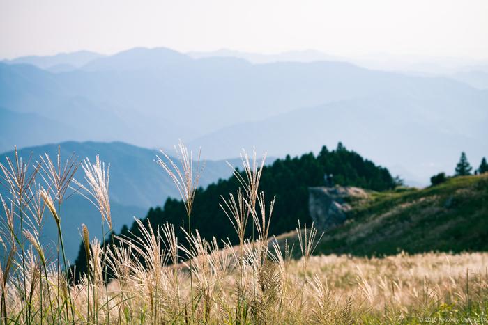 関西の名山、生石ヶ峰に広がる生石高原。 下界を見下ろすススキの景色は、雄大な自然を肌で感じます。
