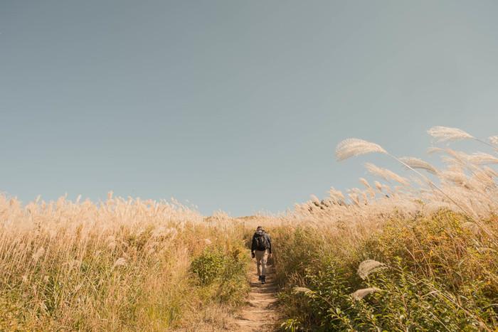 和歌山県・岩湧山の山頂エリアに広がる、ススキの草原。 登山者にも人気の高い、ススキの名所です。