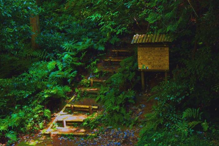 トトロの森は1991年に1号地が誕生し、2014年5月時点で25号地まで増えています。 看板にもちゃんとトトロが描かれています♪
