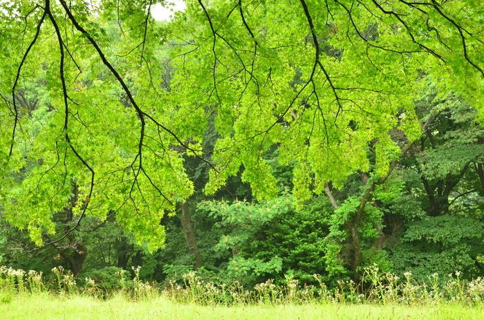 首都圏とは思えないほど自然が豊かなんです。のんびり散歩するだけでも気持ちがリフレッシュできそうです。