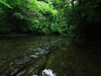 緑地のわきを流れる柳瀬川。 こちらもトトロに出てくる松井川と関連があるのではと言われています。