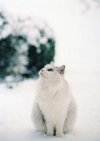 ふかふかの雪の中に飛び込む気持ちよさ。白い息を吐きながら飲むお茶のおいしさ。冬の外遊びには、日常生活で忘れていた心が躍る瞬間がいっぱい。