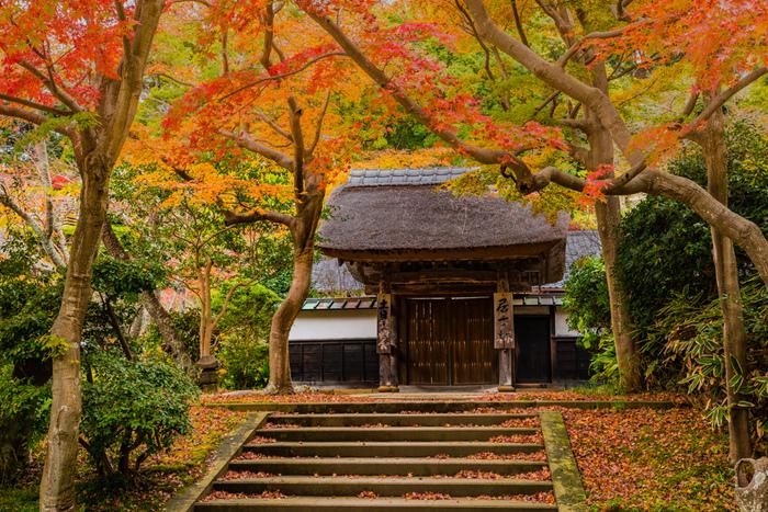 JR横須賀線「北鎌倉駅」徒歩1分。北鎌倉の円覚寺は、鎌倉の中でも絶景の紅葉スポットです。潮風の影響も少なく、黄色いイチョウと赤いカエデのみごとなハーモニーを楽しめます。北鎌倉駅からすぐ行けるので、立ち寄りやすいですよね。