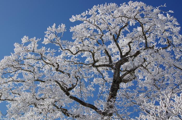 樹氷やダイアモンドダスト、白銀の世界、動物の足跡などこの季節しか見られない冬の大自然を満喫できます。