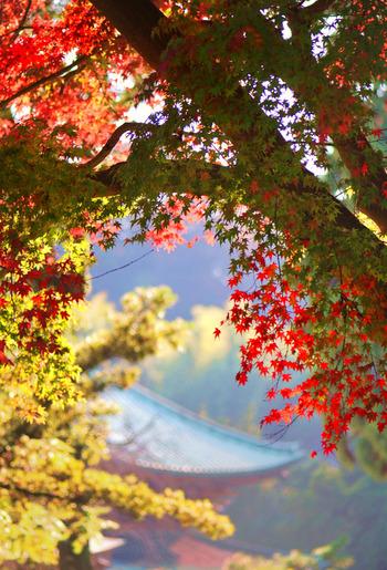 JR横須賀線「北鎌倉駅」より鎌倉駅方面に向かって徒歩約20分。真っ赤なもみじが魅力の建長寺。鮮やかな赤色に、思わずシャッターを切りたくなる紅葉スポットです。ぜひ、カメラにおさめてください。