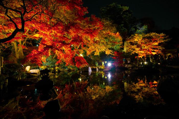 """江ノ電「長谷駅」徒歩5分。""""夜の紅葉""""を楽しめるお寺なら、長谷寺がおすすめです。見頃になると、毎年「夜間特別拝観」を開催しライトアップされた紅葉を楽しむことが出来ます。息を飲む美しさですよね。花が多いことで有名な長谷寺ですが、紅葉もとっても見応えのあるスポットです。"""