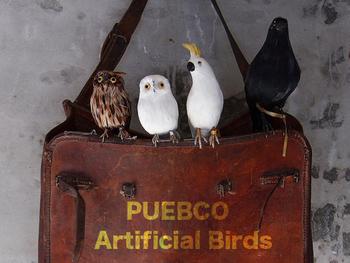 こちらは「PUEBCO(プエブコ)」のアーティフィシャルバードです。とにかくリアル!実際に本物のアヒルやガチョウの羽根が使われているのだそう。カーテンレールやテレビの上、観葉植物の枝など、ちょっとしたところにとめておくことができるので、本物の鳥がいるような気分を味わえます。種類もかなり豊富ですよ♪