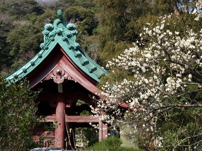 「光則寺」は小さな寺院ですが、水仙、梅、桜、ボタン等など四季折々に季節の花が楽しめる寺としてよく知られています。