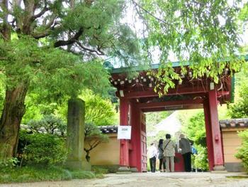 """""""長谷の花の寺""""として知られる「光則寺(こうそくじ)」は、日蓮宗の寺院。バス通りから一本路地を入り、鎌倉の住宅街を進むと、緑溢れる「光則寺」の山門に。"""