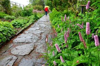 ヒル・トップに行く途中の小径脇の花壇では、季節折々の可愛らしい花々が咲いています。
