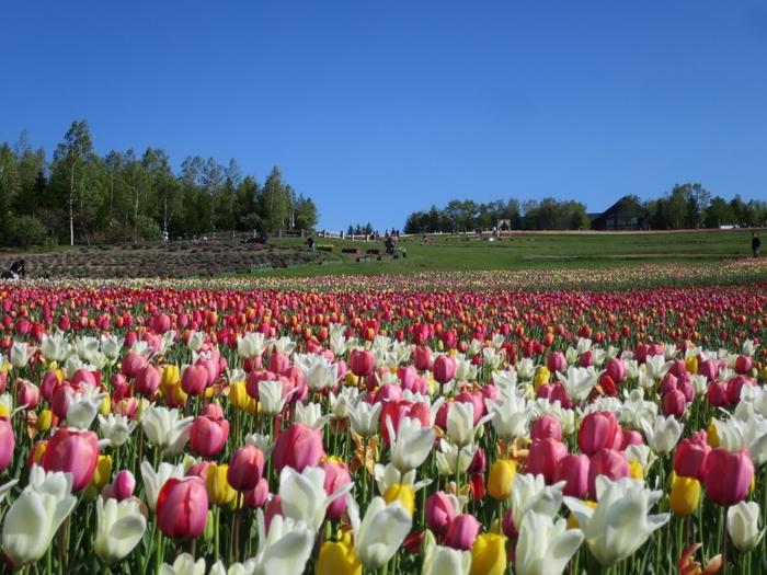 札幌市にある滝野すずらん丘陵公園は北海道唯一の国営公園で、「アシリベツの滝」を含む敷地の広さは400ヘクタールにもなります。(入場有料です)カントリーガーデンでは4月下旬頃から10月上旬頃まで、約800種の草花が四季折々の美しさを見せてくれます。