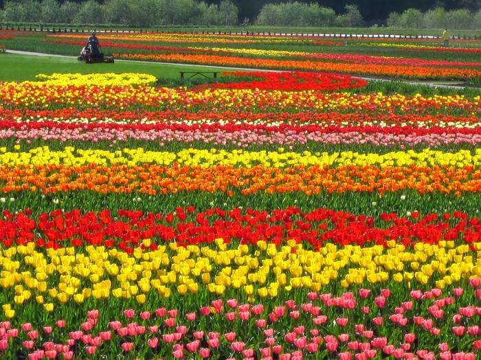 5月から6月上旬まで開催される「チューリップフェア」では、花や球根の販売・イベントなどが行われ、多くの観光客でにぎわいます。