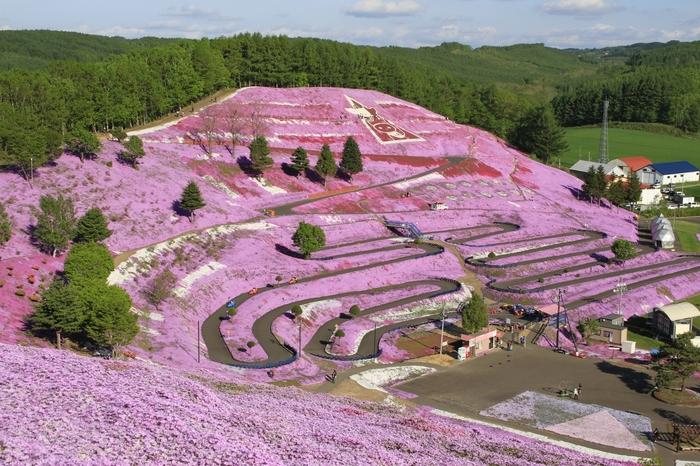 白、紫、ピンクなどの芝ざくらが10ヘクタールに渡り咲き誇る東藻琴(ひがしもこと)芝桜公園。毎年5月中旬ころが見頃ですが芝ざくらは天候に左右されるそうなので、ホームページなどを確認してから行く事をおすすめします。