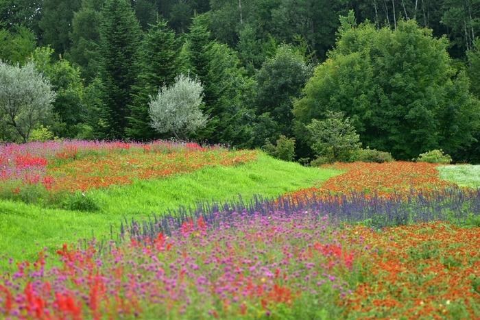 色とりどりの花畑へ出かけよう!北海道の『花』の名所12選