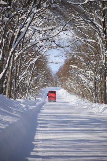 冬の期間は、路線バスは本数が極端に限られるため、レンタカー、もしくは観光タクシー・観光バスがオススメです。