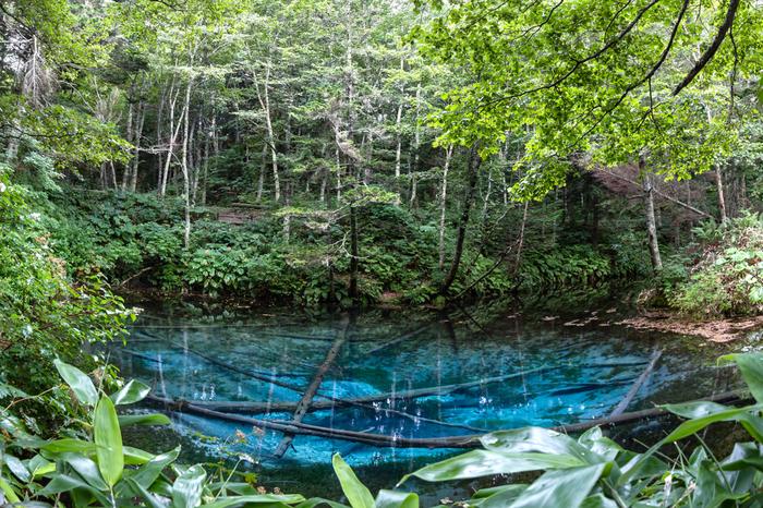 摩周湖からの地下水が湧いてできた、水深約5mの小さな池です。その透明度と美しい色は、多くの観光客を魅了して止みません。