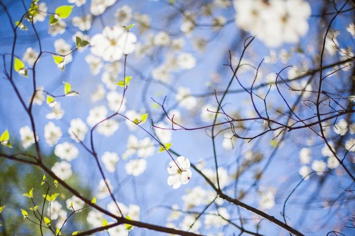 可愛らしい花柄は女性らしさが一気に増すアイテム。1アイテムだけ取り入れてみたり、陽がさす少し暖かい日には思い切りワンピースなどで全身をコーディネートしてみたり。花柄アイテムを取り入れるときっと、その日の気分も盛り上がるはず!?大人可愛く着こなしてみましょう♪