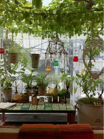「風や緑を感じられるカフェ」というコンセプトのお店。特にブドウの木があるテラススペースに座ると、気持ちの良い風がふわりと感じられます。もちろんここにもソファがあります。店内の雰囲気も含めて、まるで外国のカフェに迷い込んだかのような錯覚を受けます。