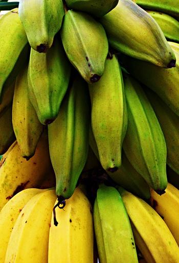 日本では通年安価で手に入るバナナ。一体どこの国で生産されているものが多く出回っているのかご存知ですか? 実は日本で出回るバナナのおよそ90%がフィリピンから輸入されたもの。次いで多いのが南米エクアドルの5%ほど。日本で食べられているバナナの99.9%以上が輸入されたものなんです。