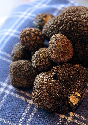 日本では、白トリュフはにんにくに、黒トリュフは海苔の佃煮に例えられることが多いです。
