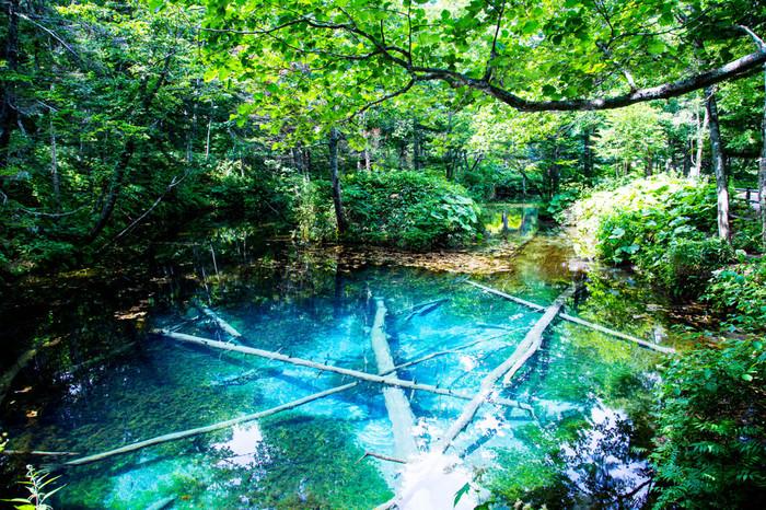 この摩周湖は湖に接する河川がないことから、外部からの有機物の流入がほとんどありません。また一年を通じて水温が低いので微生物などの繁殖も為難い環境にあります。(こちらは、後ほど紹介する「神の子池」です)