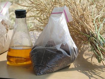 現在の国産の菜種油は、エルシン酸を含まない「アサカノナタネ」・「キザキノナタネ」・「ななしきぶ」などの品種が開発されています。搾油・精製法にこだわり作られていて、商品のラベルなどにも「無エルシン酸」と表記されています。