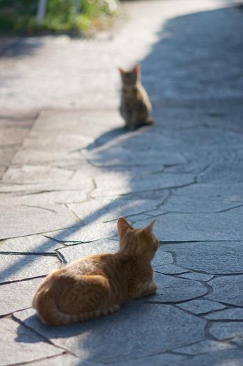 かわいい猫たちの通り道にも重なっているそうで、歩いているとたくさんの猫に出会えるかもしれません。