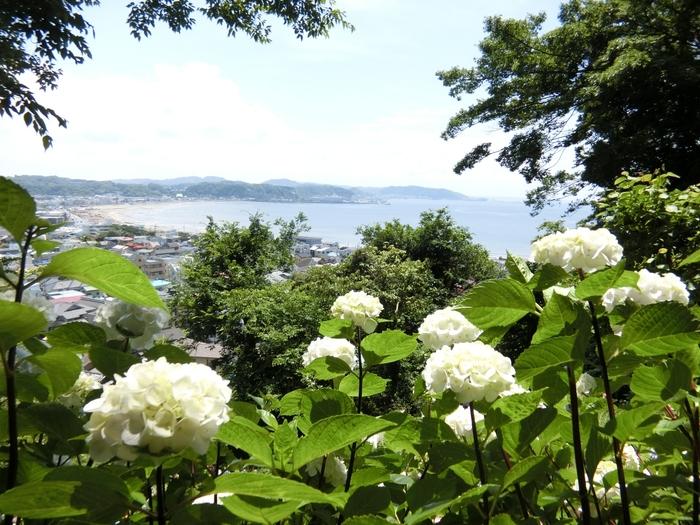 """紫陽花で知られる寺ですが、""""展望台""""と""""眺望散策路""""がある寺院としてもよく知られています。"""