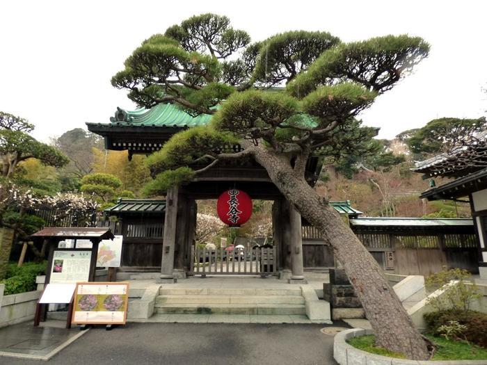 """鎌倉の""""西方浄土""""とも呼ばれる「長谷寺」も、鎌倉を代表する観光スポット。"""