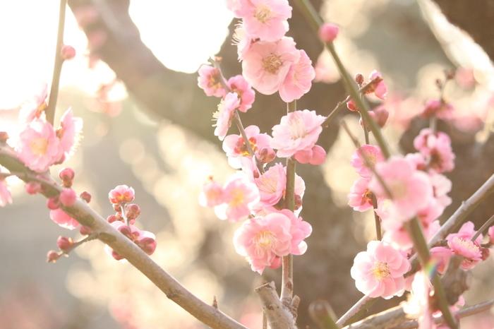 桃の花が咲き始める時期。花が咲くことを笑うと表現しています。ちなみに「山笑う」とは俳句の春の季語で、春山の明るい雰囲気をイメージさせてくれます。
