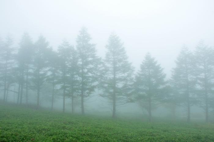 深い霧がまとわりつくようにたちこめる頃。俳句の季語では秋は「霧」、春は「霞(かすみ)」になります。