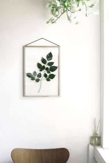 ポスターの代わりにフレッシュなグリーンをフレームに閉じ込めたら、新鮮な雰囲気に。外からの光が反射してとてもきれいですね。