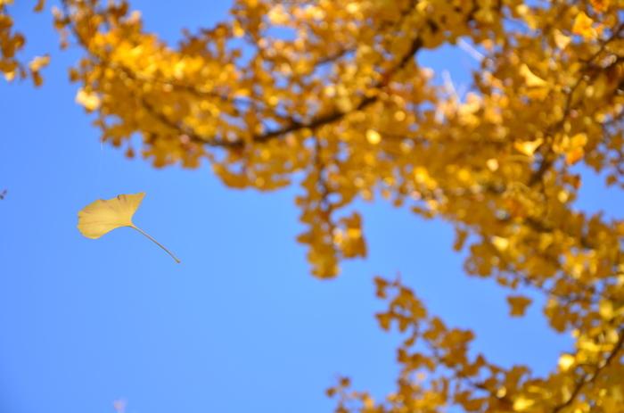 北風が木々の枝から紅葉や枯葉を吹き払う頃。「朔風」とは北から吹く風、北風のことです。
