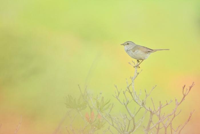 「うぐいすなく」とも読みます。その名の通り、山里でウグイスが鳴き始める頃。ウグイスは別名「春告鳥」ともいい、その声で春の訪れを知る、とされています。
