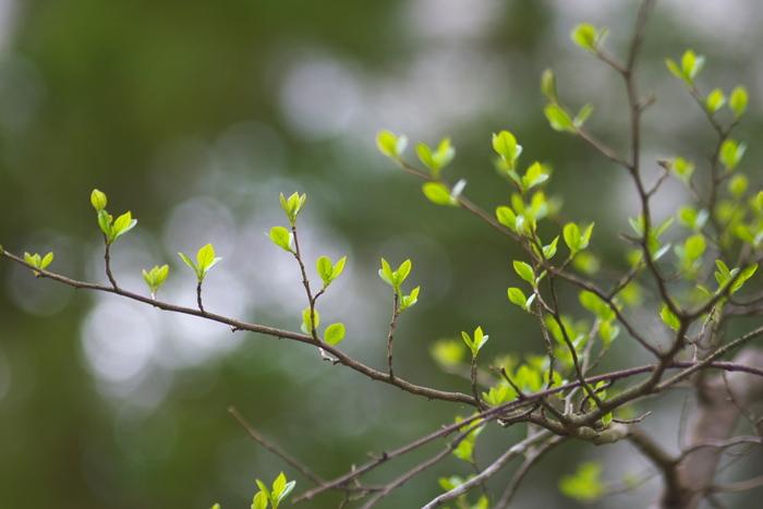 寒さも和らぎ、日に日に暖かくなりはじめ草木が芽吹き始める頃。長く寒い冬も終わり、いよいよ本格的に春がやってきます。