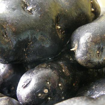 真黒にも見えるこのジャガイモ、知ってますか?「シャドークイーン」という名前の紫色のじゃがいもなんですよ。栄養価も高く、従来の紫じゃがいもの3倍のアントシアニンを含むそうです。抗酸化パワーに優れた、健康にも美容にも最適なじゃがいもです。
