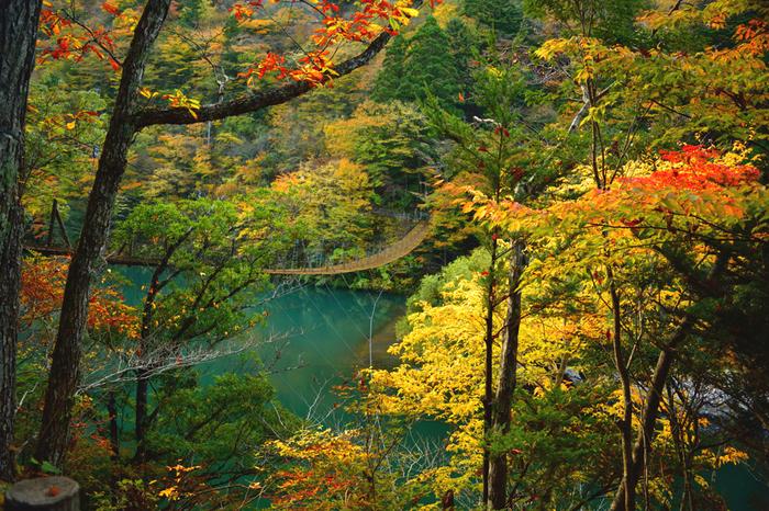 夢の吊橋がある寸又峡プロムナードコースは、山の景観を楽しみながら「夢の吊橋」→「尾崎坂展望台」→「飛龍大橋」を巡る1周約90分のコースです。