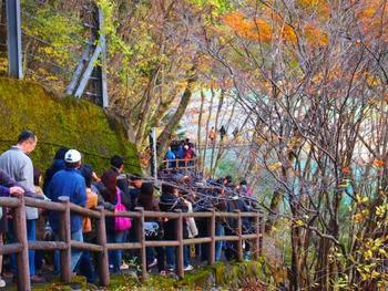寸又峡は紅葉スポットとしても有名ですので、順番待ちの間はゆっくりと美しい紅葉を眺めて過ごしましょう。