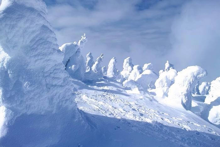 """樹氷が出来るのに必要な、一定方向に吹く風と低い気温、アオモリトドマツの木という3つの条件を満たしている山形蔵王は、日本でも珍しい""""樹氷が美しい場所""""となっています。"""