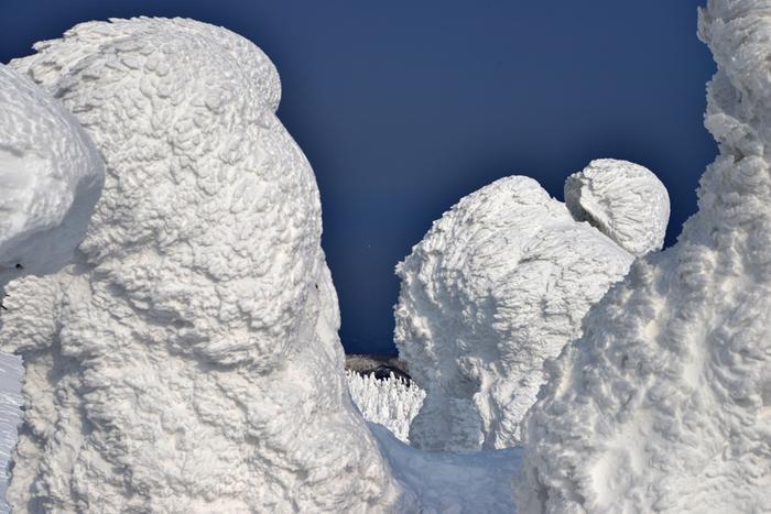アオモリトドマツの葉に水滴が付いて凍り付き、そこに雪が降り積もることの繰り返しによって作られる「樹氷」。 まるで大きな彫刻作品のようです。風の向きや雪の量によって形が変わるため、同じものは2つとありません。