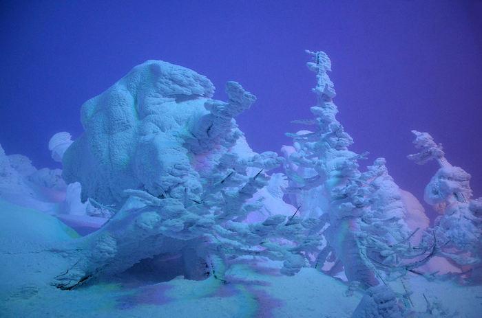 遠くからの眺めだけでなく樹氷のすぐ近くまで行きたいという方には、暖房付き雪上車に乗り込んで樹氷を間近で見ることのできるツアーがおすすめです。夕暮れを背に浮かびがる樹氷や夜の闇に光る樹氷はとても幻想的です。