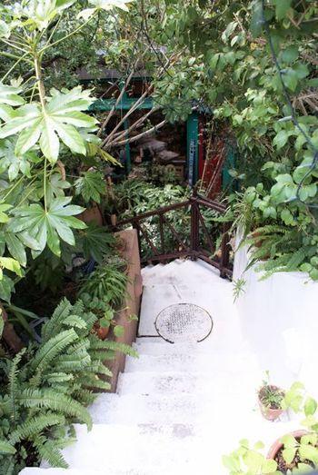 地下にある店内へ続く階段へ一歩足を踏み入れると、そこはもう異空間。たくさんの木々やお花に囲まれて、まずはここで深呼吸!マイナスイオンをチャージしましょう☆