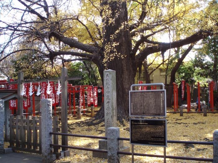 鬼子母神とは、安産と子供を守る神様。池袋から明治通り沿いに歩いて、小道に入ると静かな住宅街の中にあります。境内にある、大きな銀杏の木は、樹齢600年ともいわれ、子授け銀杏とも言われています。