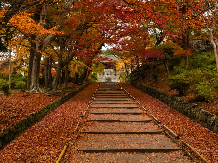 毘沙門堂は、JR・地下鉄山科駅から徒歩約20分の場所にある寺院です。駅から山のほうへ登っていくと毘沙門堂へ続く階段が見えます。びっしりと敷き詰められたような紅葉は圧巻のひとこと。人が少なく、紅葉が踏まれていない早朝に行くのがおすすめです。