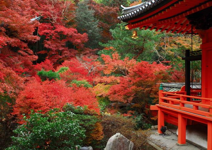 入り口の階段が有名ですが、毘沙門堂内の紅葉も見ごたえがあります。弁天堂を囲む紅葉の燃えるような赤は、ぜひ見ておきたいポイントです。