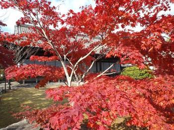 本堂のガラスに映る紅葉も魅力的です。近くには随心院や醍醐寺もありますので、足をのばしてみるのもおすすめです。