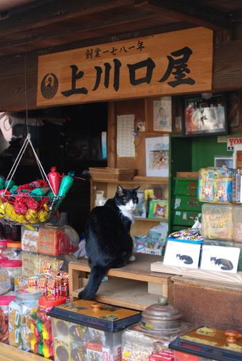 店先にいる、ちょっとご年配のネコちゃんです。子供が騒いでも、おとなしく寝ている様子を見ていると、立派な看板ネコですね。