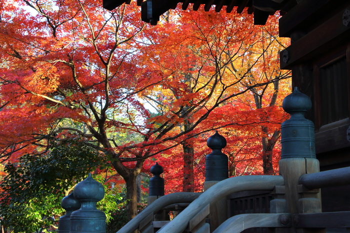 拝観料が必要ですが、本堂回廊から見る紅葉もとても美しいんです。