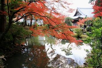 金戒光明寺は真如堂の隣にあるので、一度に両方行かれるのはいかがでしょうか。紫雲の庭では、赤黄緑の木々のグラデーションを楽しむことができます。境内は無料ですが、紫雲の庭は有料です。「そうだ、京都に行こう」のポスターになった場所の紅葉もきれいです。
